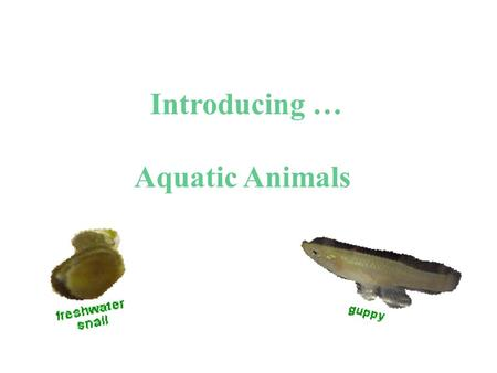 Introducing … Aquatic Animals. Observing Freshwater Snails Observe, draw, and describe.