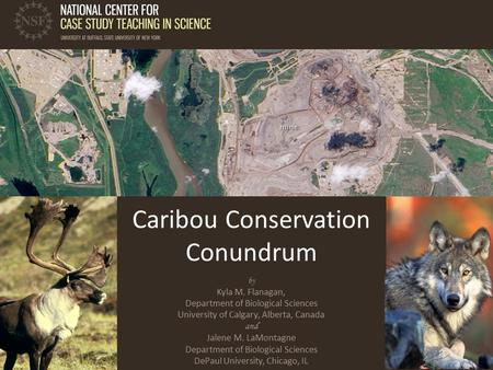 Caribou Conservation Conundrum by Kyla M. Flanagan, Department of Biological Sciences University of Calgary, Alberta, Canada and Jalene M. LaMontagne Department.