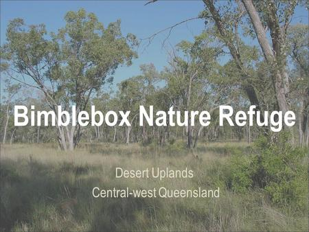 Bimblebox Nature Refuge Desert Uplands Central-west Queensland.