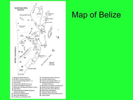 Map of Belize. Bird Identification Habitat Types Cloud Forest Submontane Broadleaf Forest Lowland Broadleaf Forest Submontane Pine Woodland Lowland.