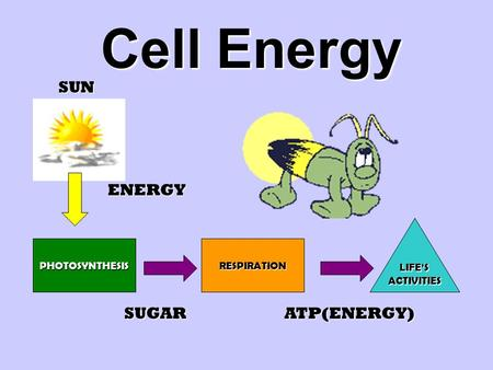 Cell Energy SUN ENERGY SUGAR ATP(ENERGY) LIFE'S ACTIVITIES