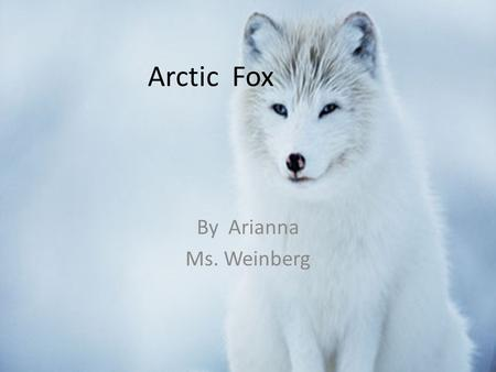 Arctic Fox By Arianna Ms. Weinberg. Arctic Fox Why I Chose My Animal? I chose my animal an arctic fox because it is an amassing animal.