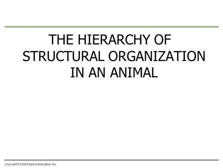 THE HIERARCHY OF STRUCTURAL ORGANIZATION IN AN ANIMAL Copyright © 2009 Pearson Education, Inc.