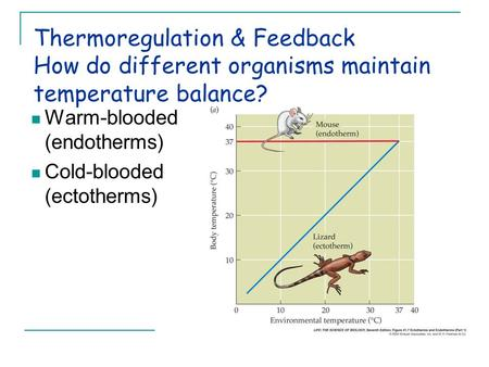 Thermoregulation & Feedback How do different organisms maintain temperature balance? Warm-blooded (endotherms) Cold-blooded (ectotherms)