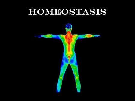 Homeostasis Homeostasis is like your home's thermostat Thermostat's set point is 75ºF Inside temperature = heat 72ºF73ºF74ºF75ºF.