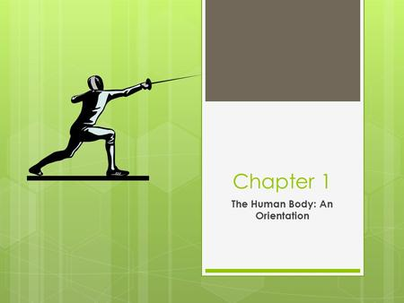 Chapter 1 The Human Body: An Orientation. Anatomy vs. Physiology  Anatomy- studies the structure of the body parts and their relationships to one another.