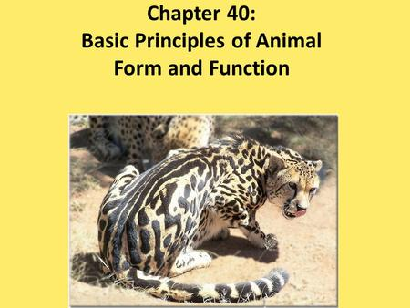 Chapter 40: Basic Principles of Animal Form and Function.