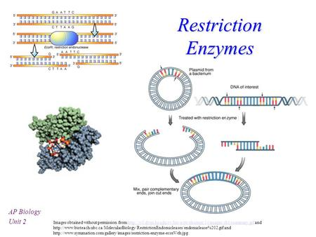 Restriction Enzymes AP Biology Unit 2 Images obtained without permission from  and.