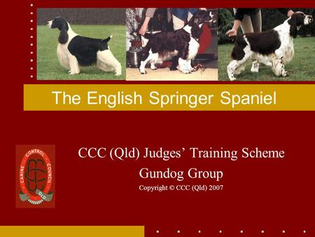 The English Springer Spaniel CCC (Qld) Judges' Training Scheme Gundog Group Copyright © CCC (Qld) 2007.