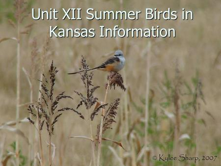 Unit XII Summer Birds in Kansas Information. Introduction to Summer Birds Many of our summer birds do not spend the entire year here; they are insectivores.