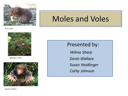 Moles and Voles Presented by: Wilma Sharp Devin Wallace