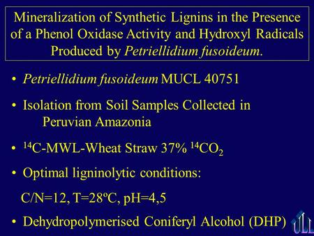 Mineralization of Synthetic Lignins in the Presence of a Phenol Oxidase Activity and Hydroxyl Radicals Produced by Petriellidium fusoideum. Petriellidium.