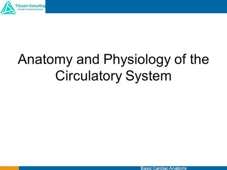 Anatomy and Physiology of the Circulatory System