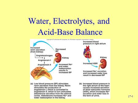 27-1 Water, Electrolytes, and Acid-Base Balance. 27-2 Body Fluids Intracellular –All fluids inside cells of body –About 40% of total body weight Extracellular.