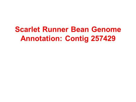 Scarlet Runner Bean Genome Annotation: Contig 257429.