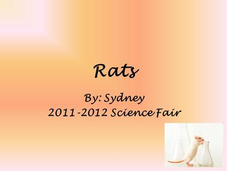 Rats By: Sydney 2011-2012 Science Fair. Problem Will the food you place in a trap affect the mouse's likely hood to bite the bait?