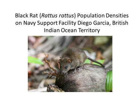 Black Rat (Rattus rattus) Population Densities on Navy Support Facility Diego Garcia, British Indian Ocean Territory.