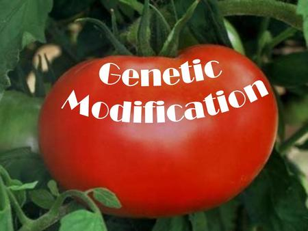 Genetic modification allows us to manipulate the characteristics of a plant by altering its genome.