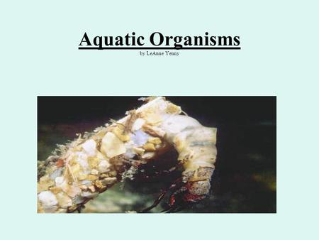 Aquatic Organisms by LeAnne Yenny. Benthic Macroinvertebrates Used as bioindicator organisms The presence or absence of these organisms in a stream can.