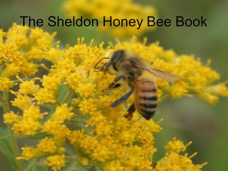The Sheldon Honey Bee Book. Written by Steve McElroy Photographed and Edited by Steve McElroy Andy Kennedy Tricia Barrett Paul Thornton Nicole Espenant.