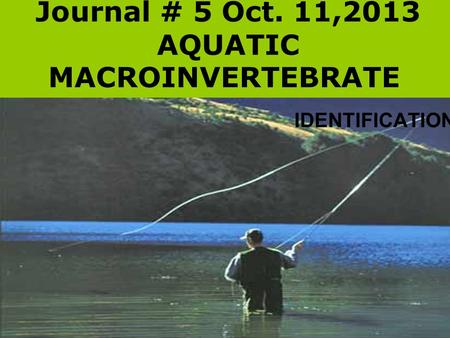 Journal # 5 Oct. 11,2013 AQUATIC MACROINVERTEBRATE IDENTIFICATION.