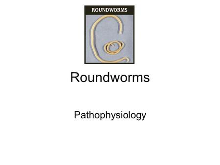 Roundworms Pathophysiology. Ascaris lumbricoides largest nematode parasitizing the human intestine most common human helminthic infection worldwide.