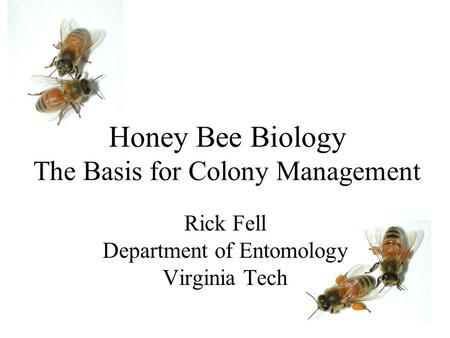 Honey Bee Biology The Basis for Colony Management Rick Fell Department of Entomology Virginia Tech.