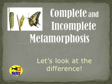 Let's look at the difference!. Metamorphosis refers to the way that certain organisms develop, grow, and change form. Metamorphosis actually means change.