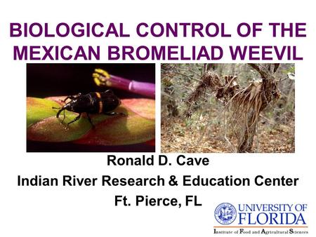 BIOLOGICAL CONTROL OF THE MEXICAN BROMELIAD WEEVIL Ronald D. Cave Indian River Research & Education Center Ft. Pierce, FL.
