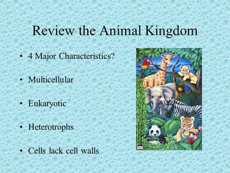 Review the Animal Kingdom