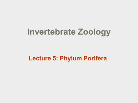 "Invertebrate Zoology Lecture 5: Phylum Porifera. Lecture outline  Phylum Porifera  Overview  Body structure and the aquiferous ""system""  Nutrition,"
