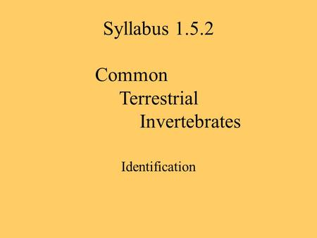 Syllabus 1.5.2 Common Terrestrial Invertebrates Identification.