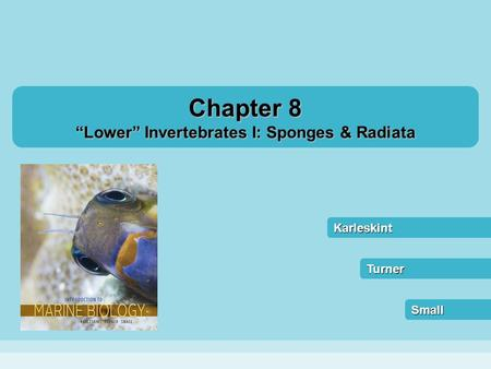 """Lower"" Invertebrates I: Sponges & Radiata"