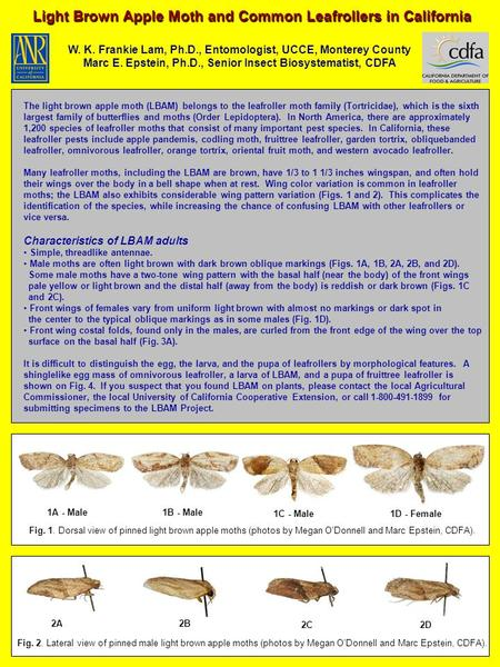 Light Brown Apple Moth and Common Leafrollers in California W. K. Frankie Lam, Ph.D., Entomologist, UCCE, Monterey County Marc E. Epstein, Ph.D., Senior.