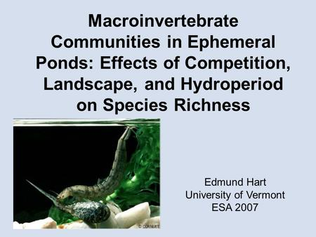 Macroinvertebrate Communities in Ephemeral Ponds: Effects of Competition, Landscape, and Hydroperiod on Species Richness Edmund Hart University of Vermont.