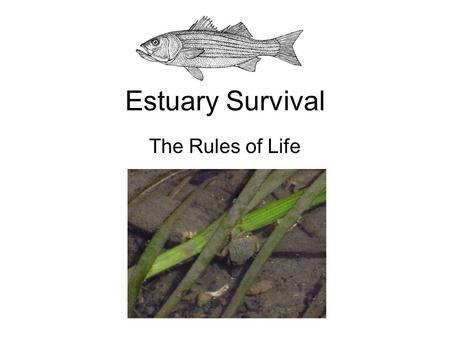 Estuary Survival The Rules of Life