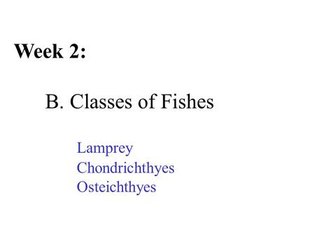 Week 2: B. Classes of Fishes Lamprey Chondrichthyes Osteichthyes.