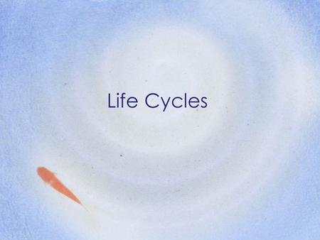 Life Cycles. Objective: Plants and animals have life cycles that include the beginning of life, growth and development, reproduction and death. The details.