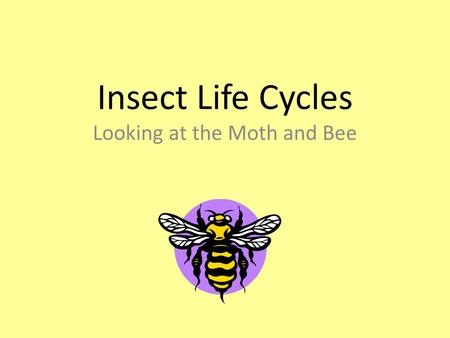 Insect Life Cycles Looking at the Moth and Bee. A Quick Review… What is an insect? An insect has an exoskeleton and has:  a body with three parts  segmented.