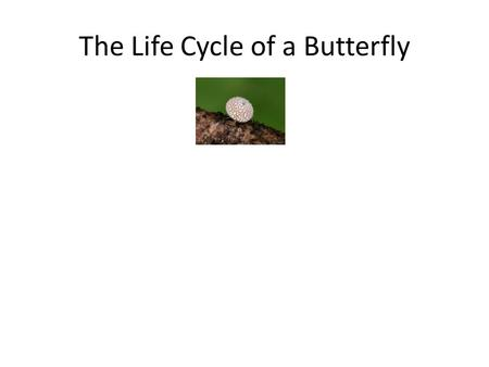 The Life Cycle of a Butterfly. egg The Life Cycle of a Butterfly egg.