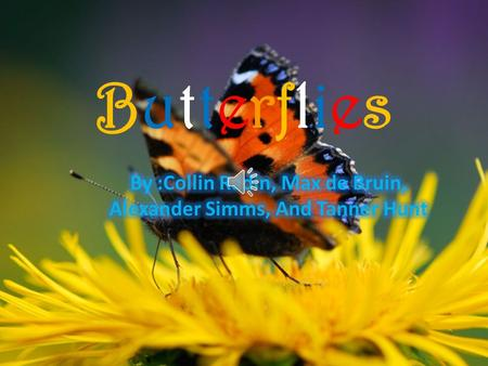 ButterfliesButterflies Butterfly Life Cycle Click too see butterfly life cycle!!!!!!!!!!! The first stage is the egg. The second stage is the larva.
