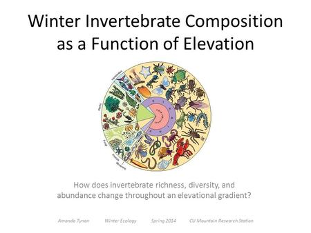 Winter Invertebrate Composition as a Function of Elevation How does invertebrate richness, diversity, and abundance change throughout an elevational gradient?