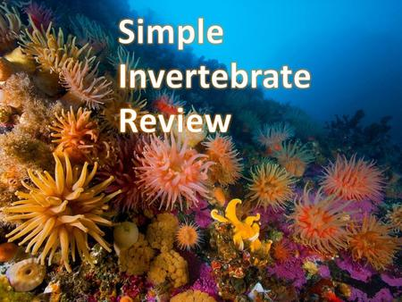 Word Bank homeostasishermaphroditeinvertebrates bilateral symmetryvertebratesradial symmetrylarva Animals without a backbone invertebrates.