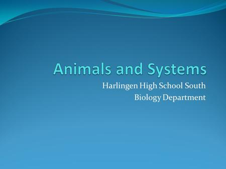 Harlingen High School South Biology Department. All Animals Fall Under Two Categories: Domain – Eukarya Kingdom - Animalia Invertebrates (no spine) 1.Sponges.