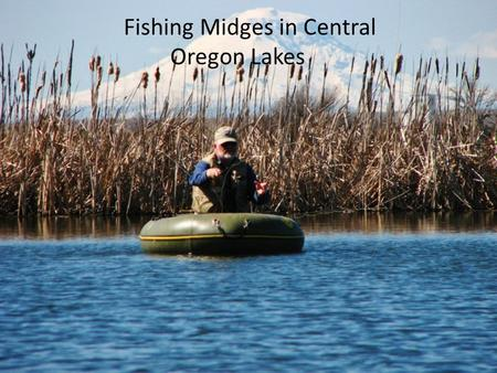 Fishing Midges in Central Oregon Lakes. What is a midge? Insect, Diptera (true flies), Chronomidae > 2,500 species in NA Larva, pupa & adult stages Life.