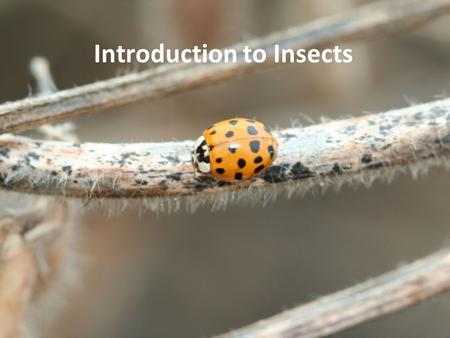 Introduction to Insects. Outline Insects and their relatives How insects rule the world Insect anatomy and biology.