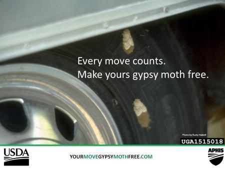 YOURMOVEGYPSYMOTHFREE.COM Every move counts. Make yours gypsy moth free. Photo by Rusty Haskell.