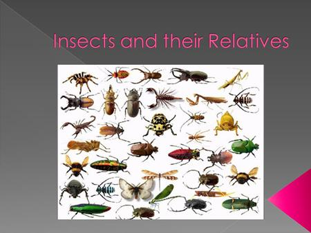  Insects are like arthropods because they have a segmented body, an exoskeleton, and jointed appendages  They have a body divided into three parts: