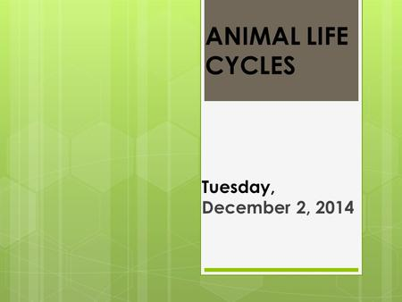 ANIMAL LIFE CYCLES Tuesday, December 2, 2014. Objectives  ELA: I can identify vocabulary words.  Exceeding: I can listen to a story and answer comprehension.