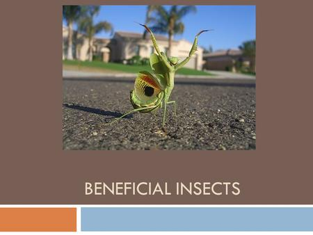 BENEFICIAL INSECTS. Predatory Mites Order Acari Family Phytoseiidae Life History: Several families; phytoseiids are used in agriculture and horticulture.